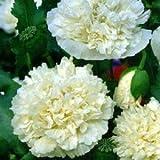 Mohn, Schlafmohn 'White Paeony' 30 Samen - Papaver somniferum (Poppy White Peony)