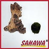 Wurzel, Mangrove, Mopani+ Mooskugel Gratis Sahawa Aquarium, Terrarium Deko ca. 12-15 cm