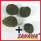 Mooskugel ca 3-5cm,Mooskugeln,Moosball Sahawa 3+1 Gratis Wasserpflanzen,Aquarium-Deko