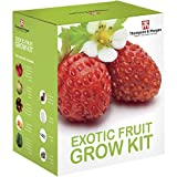 Exotische Frucht- Samen Wachstums Set Geschenkbox von Thomspon & Morgan - 5 fruchtig Aromen to Grow...
