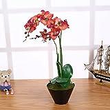 Künstliche Orchideen im Topf Rot mit 3 Rispen 55cm I ECHT WIRKEND I Kunstblume Phalaenopsis...