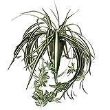 MICA Decorations 918252 Chlorophytum L45D45 gruen in Topf Stan D11.5 grau Kunstpflanze, Polyester,...