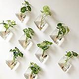 Mkouo 2 Stück Glas zum Aufhängen Wand Vase Flower Pflanztopf Behälter Wasser Pflanzkübel Home...