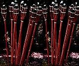 24 Stück Gartenfackel Bambusfackel 90 cm in Mahagoni Farbe aus Bambus für draussen inkl Docht +...