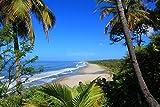 Sticker Selbstklebend oder zeigt Poster Tropical Beach NP _ 00032Dressurschabracke, Affiche...
