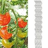 10x Tomatenspiralstab 180cm voll verzinkt Tomatenstab Tomaten Ranke Pflanzstab Stahl Profi Qualität...