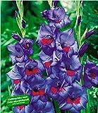 BALDUR-Garten Riesen-Gladiole'Zigeunerbaron', 15 Stück Gladiolus