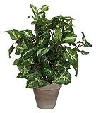 MICA Decorations 966057 Blumen, Grüne Pflanzen Kleine Blätter