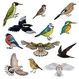 12 Wunderschöne Vogel-Fensterbilder von Articlings. 11 Verschiedene Vögel & 1 Eule. Statisch...