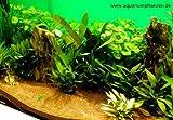 Mühlan - Wasserpflanzen Hintergrundmix, 4 Bund Aquarienpflanzen + 4 Wasserpflanzentöpfe inkl....