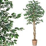 PLANTASIA Ficus-Baum, Echtholzstamm, Kunstbaum, Kunstpflanze - 190 cm, Schadstoffgeprüft