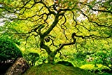 VLIES Fototapete (37V)-JAPANESE MAPLE TREE -Größe 350x260 cm in 7 BAHNEN 50cm Breite x 260cm Höhe...