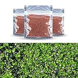 Handfly 3pcs Samen von Wasserpflanzen-Fischbehälter Zierpflanzen Samen Aussichten Mini Blatt,...