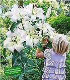 BALDUR-Garten Tree-Lily Pretty Woman 3 Zwiebeln Baumlilien Lilium Hybride Lilien Zwiebeln winterhart...