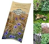 Saatgut Set: 'Katzenkräuter', 3 Pflanzen die ihre Katze lieben wird, Samen in schöner...