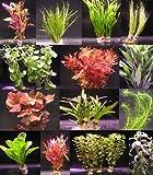 6 Bunde mit mehr als 40 Aquarium-Pflanzen - buntes Sortiment für ein 60 Liter Aquarium,...