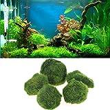 Marimo Mooskugel für Aquarium, Aquarien Pflanzen Dekorationszubehör -durchmesser 3-5cm