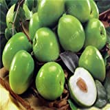 Ziziphus Jujube Bonsai sehr süß gesund Bio Rot Jujube Pflanze Bonsai Obstpflanze für DIY...