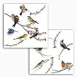 Komar 16003, Bunt Window-Sticker BIRDS Fensterdeko, Ornithologie, Fenstersticker, Fensterfolie,...
