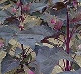 De Bolster 12000 Rote Gartenmelde (Bio-Gartenmeldesamen)