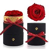 iteaauk Ewige Rosen, Infinity Rose, Echte Rosen, Die Schöne und das Biest Rose Geschenk Kit, für...
