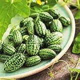 Yukio Samenhaus - 5pcs Rarität Mexikanische Minigurke Snack-Gurke Ziergurke Kletterpflanzen,...