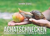 Achatschnecken Haltung, Pflege, Tipps & Tricks: (inkl. Anleitung für die Zucht) - alles über die...