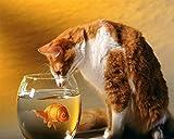 YIZHL Diamond Art Full Drill Kits,40x50cm DIY Katze, die Goldfisch in einem Aquarium Art Craft Home...