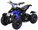 Actionbikes Motors Mini Kinder Elektro Quad ATV Cobra 800 Watt 36 V Pocket Quad - Original Saftey...