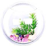 KIRALOVE Wandaquarium - 9 cm - glasfisch - vase - wandgestaltung - wasserpflanzen im Fernsehen...