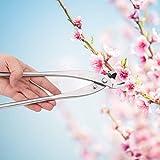Huairdum Leicht zu handhabende, beschneidende Bonsai-Gabelzweige Verschleißfestes Bonsai-Werkzeug,...