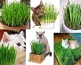 Stk - 70g Riesen Katzen Gras Katzengras Big Barley Nager Haustier Futter R32 - Seeds Plants Shop...