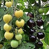 Schneewittchen-Tomaten-Samen, fruchtiger Bonsai-süßer Cherry Flowers Seeds Organic Garden...
