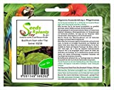 Stk - 30x Basilikum Siam oder Thai Kräutersamen Samen Saatgut Frisch Neuheit KS258 - Seeds Plants...