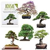 Exotische Bonsai Samen mit hoher Keimrate - Pflanzen Samen Set für deinen eigenen Bonsai Baum (5er...