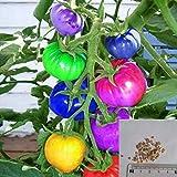 Beautytalk-Garten 100 Pcs Bunte Tomatensamen Gemüsesamen Kirschtomatensamen Obstsamen Bonsai...