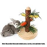 Jiang Hui Automatisierte Futterspender Futterbaum Für Kaninchen, Meerschweinchen, Ratten und Degus...