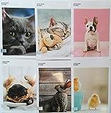 Notizbuch Maxi SEVEN colour code ANIMALS Tiere - Heft 5 Stück - RIGO C - 1 Zeile mit Rand - max qty...