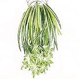 dfhdrtj langlebige grne knstliche Chlorophytum-Comosum Kunstpflanze fr Zuhause, Garten, Kunstseide,...