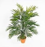Seidenblumen Roß Zimmerpalme/Palmenbusch 60cm im Topf GA aus Kunststoff Kunstpflanzen Kunstpalmen...