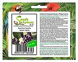 Stk - 30x Basilikum Canella Kräutersamen Samen Saatgut Frisch Neuheit KS264 - Seeds Plants Shop...