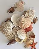 hibuy Muscheln gemischt, Muschelsortiment zum Dekorieren und Basteln, Muschel Sortiment, ca 25 Teile...