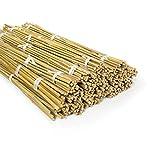 casa pura Bambusstäbe Bahia in Gärtner-Qualität | Bambus Rankhilfe Pflanzenhalter Pflanzstab...