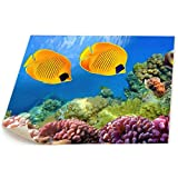 Paint C Artwork Bilder Bedruckt, Rahmenlos, wunderbare Aquarium-Leinwand, Kunstdruck, Dekoration...