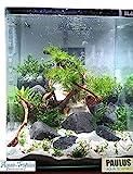 BLAU aquaristic - Nano-Aquarium Cubic 10 Liter - Glas Aquarium, Garnelen Aquarium