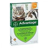 Bayer Vital GmbH Advantage 40 mg für kl.Ka 4X0.4 ml