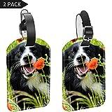 Bennigiry Hundeanhänger/Gepäckanhänger mit Sichtschutz, Leder, 2 Stück Multi3 Einheitsgröße