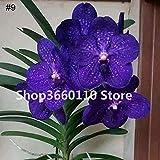 SANHOC Original! 35 PC/Bag Orchidee Flores, Phalaenopsisorchideenblume plantas für zu Hause Garten...