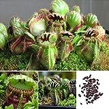 pengyu-Fliegenfalle Samen, 10 Stck Fliegenfalle Samen Balkon Bonsai-Topf insektivorse Pflanze Blume...