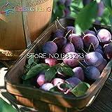 Pinkdose® Schwarzbraune Pflaumen-Samen, sehr schmackhaft, Obst-Samen, Gartensamen, Gemüse und...